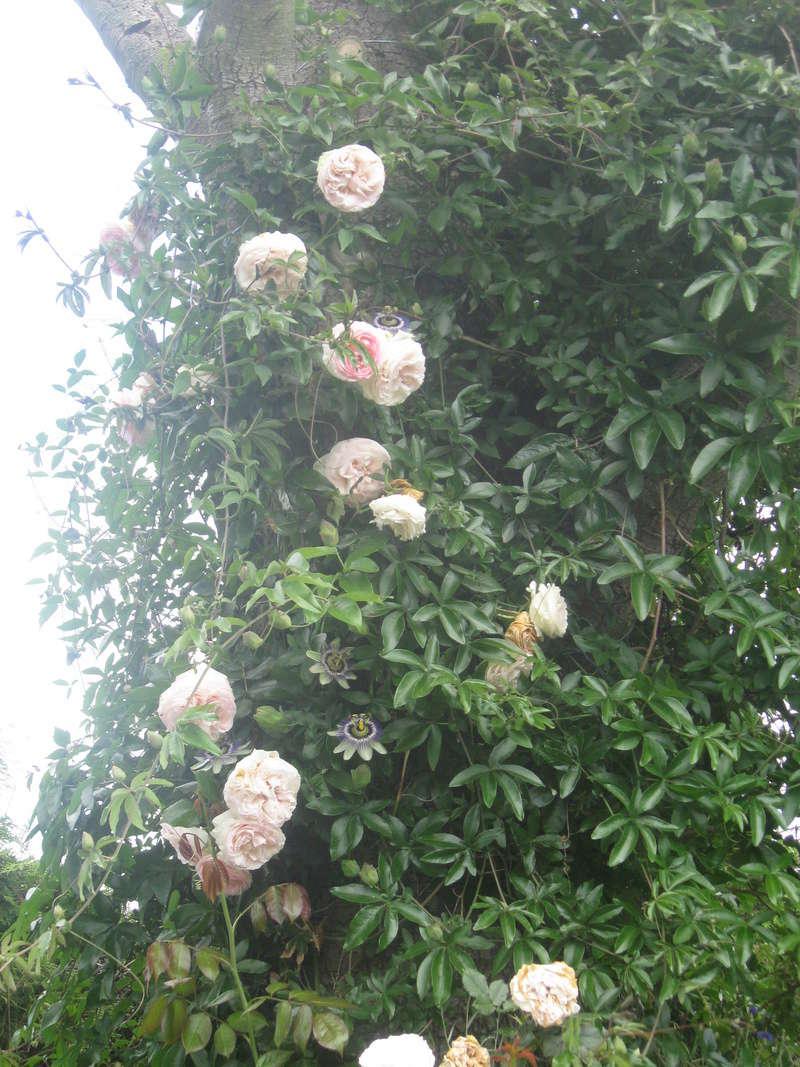 visite de mets  fleurs  Harico47