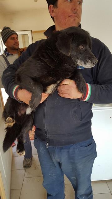 SHERLOCK, mâle, croisé de petite taille, né environ en 2010 - Remember Me Land - Adopté par Jeannine (Belgique) 17094111