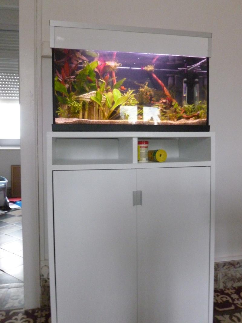 Mon premier aquarium 54L, type amazonien P1030910