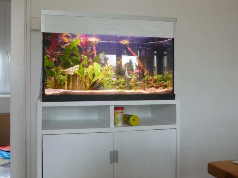 Mon premier aquarium 54L, type amazonien P1030911