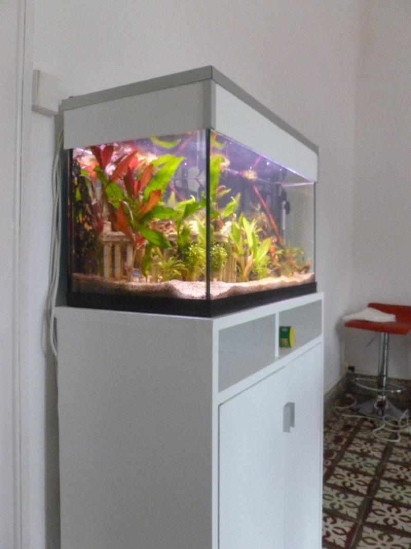 Mon premier aquarium 54L, type amazonien P1030912