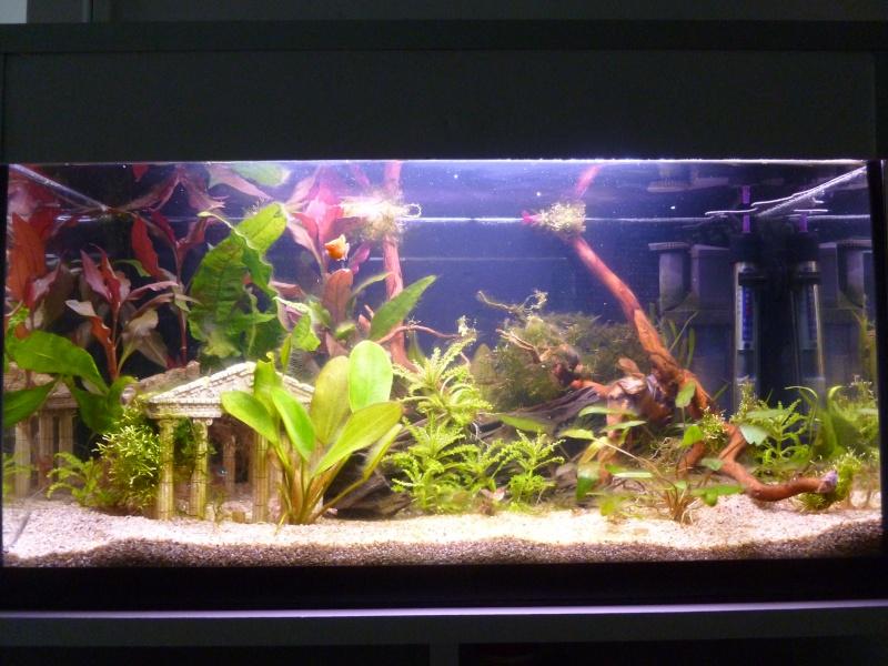 Mon premier aquarium 54L, type amazonien P1030913