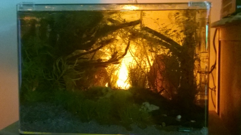 aquascaping Scarper's Tank Dennerle 50 litres. Denerl12
