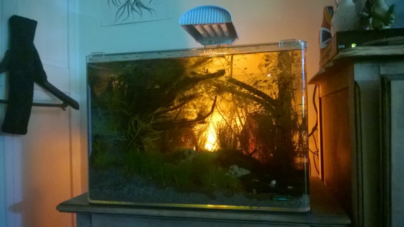 aquascaping Scarper's Tank Dennerle 50 litres. Denerl13