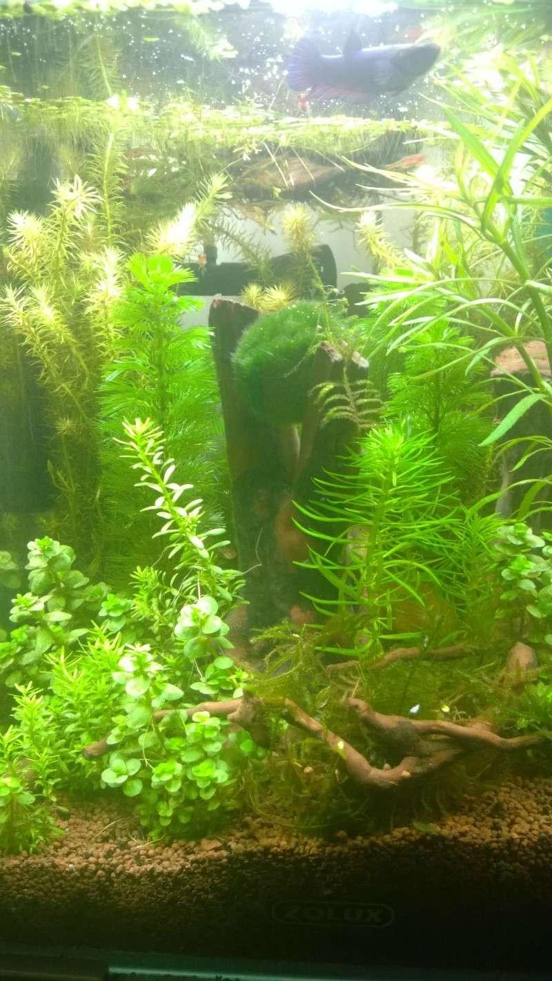 Mes autres aqua quelques photos Wp_20113