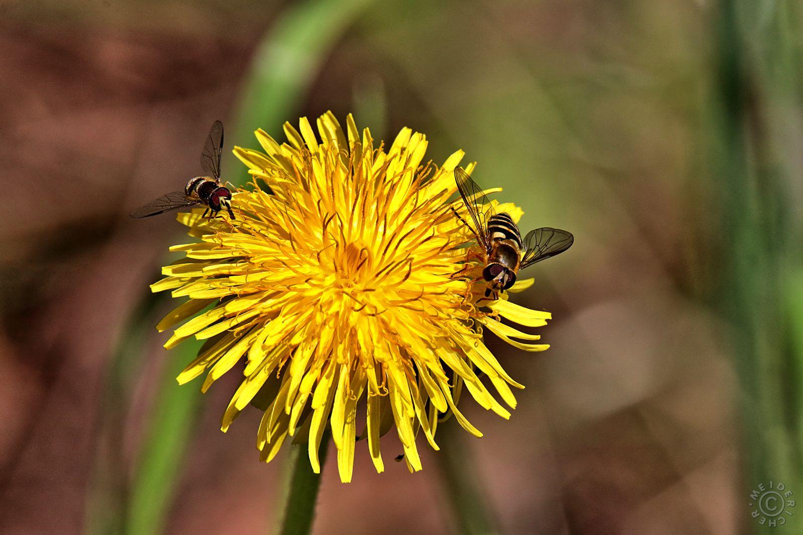 Bienchen und Blümchen 113