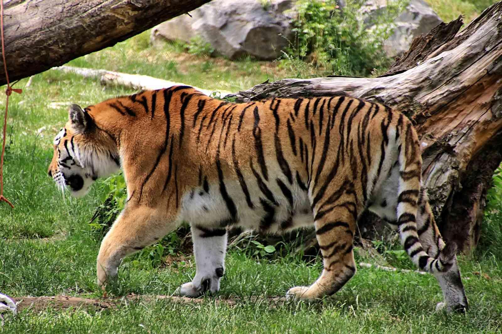 Zoo Duisburg 1311
