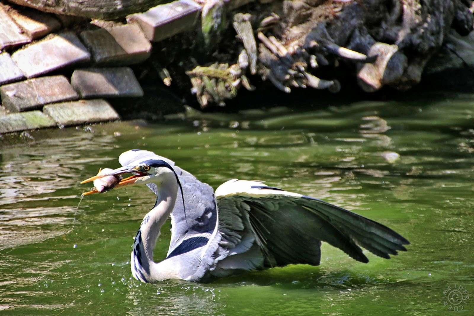 Zoo Duisburg 1511