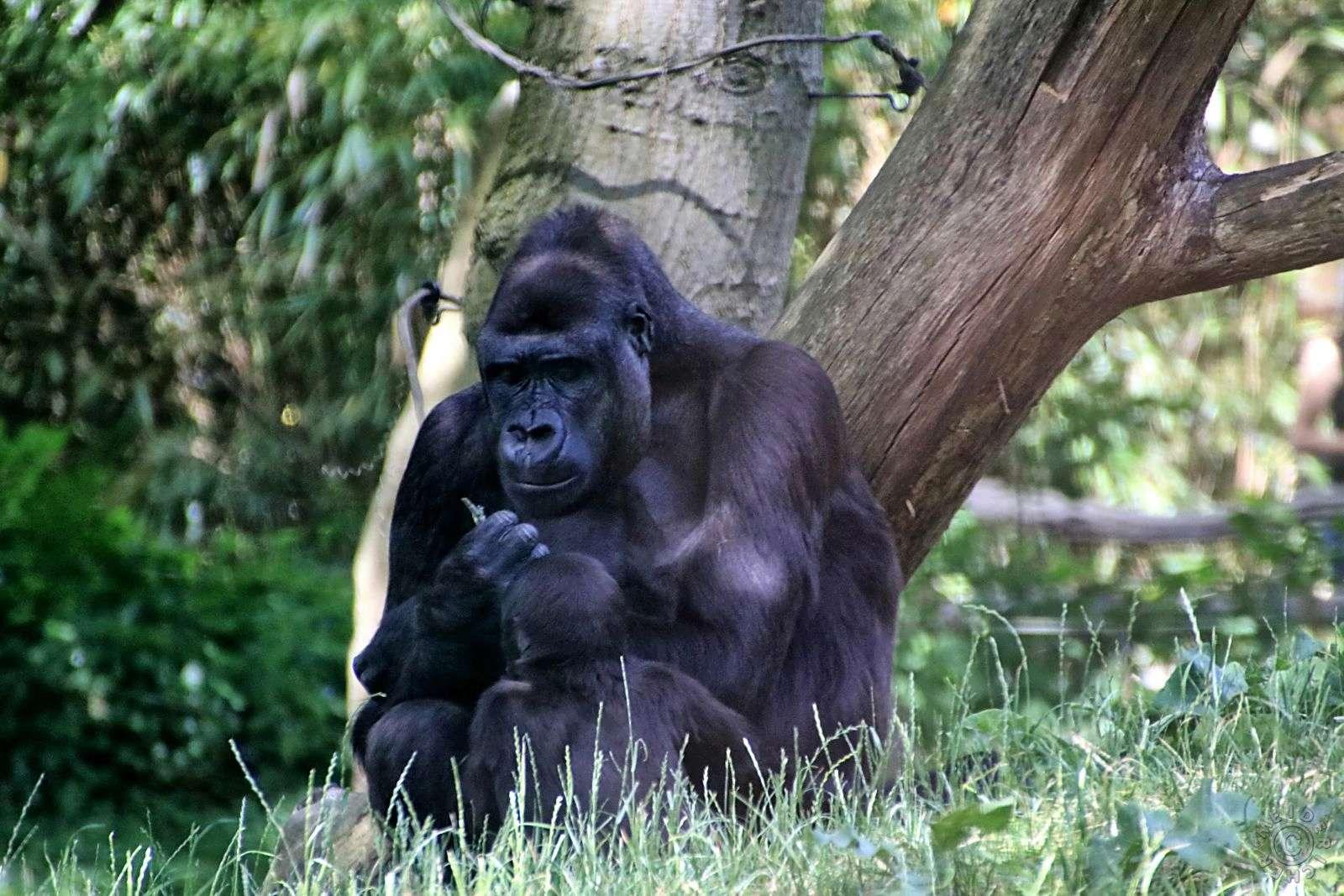 Zoo Duisburg 216