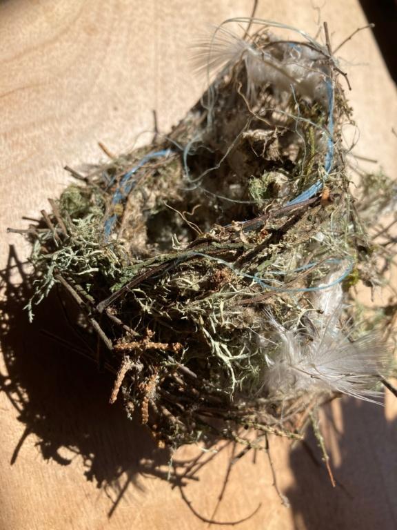 Nid de pinson, verdier ou chardonneret Image010