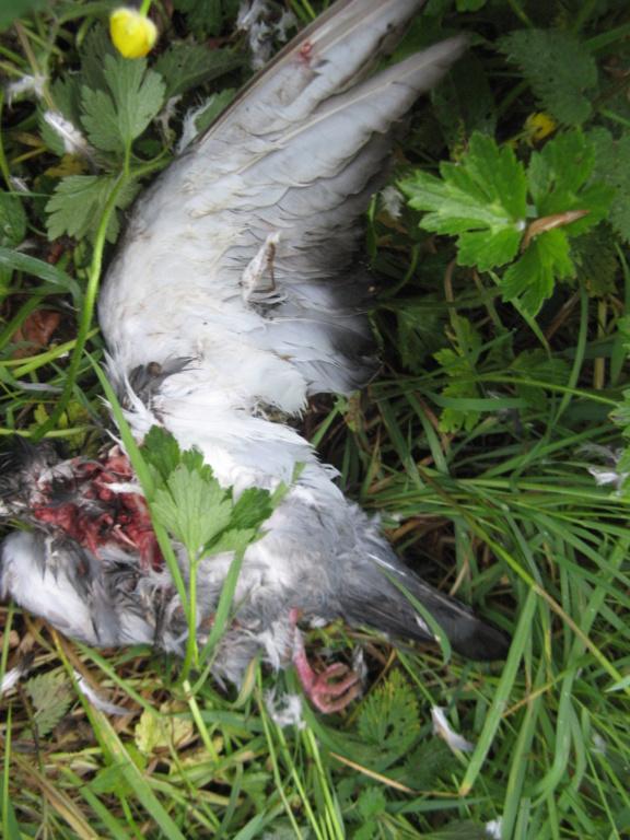 Oiseau sans tête ni entrailles Img_6112