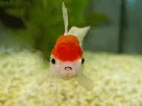Bon Mardi Fish10