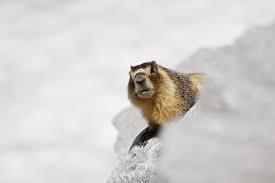 Bon Vendredi Marmot10