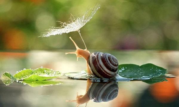 Bon Samedi Snails10