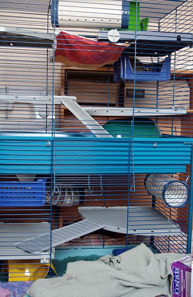 Monter 2 cages furet plus l'une sur l'autre Cage-a10