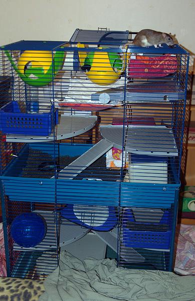 Monter 2 cages furet plus l'une sur l'autre Ratoun10