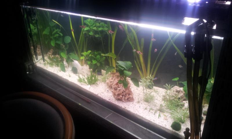 Bonjour mon aquarium 20140313