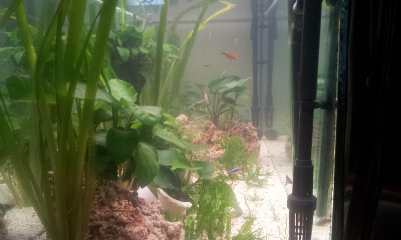 Bonjour mon aquarium 20140314