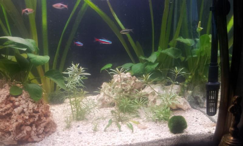 Bonjour mon aquarium 20140315