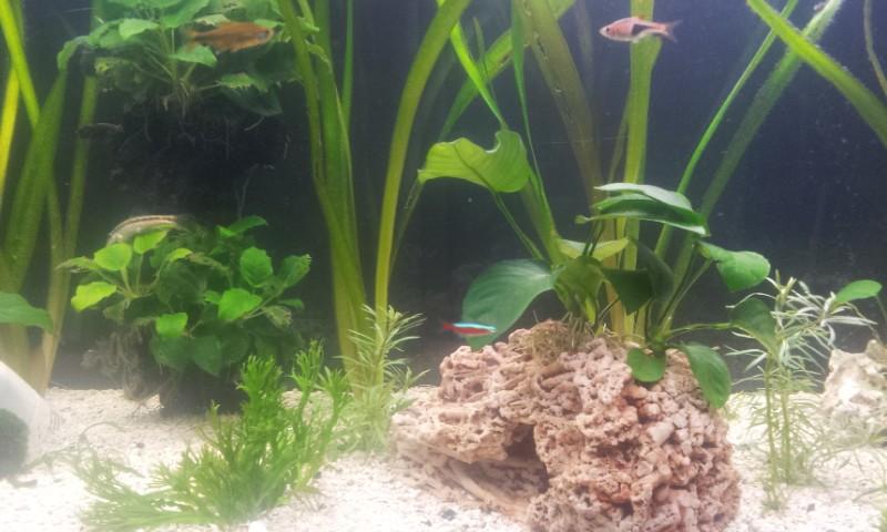 Bonjour mon aquarium 20140316