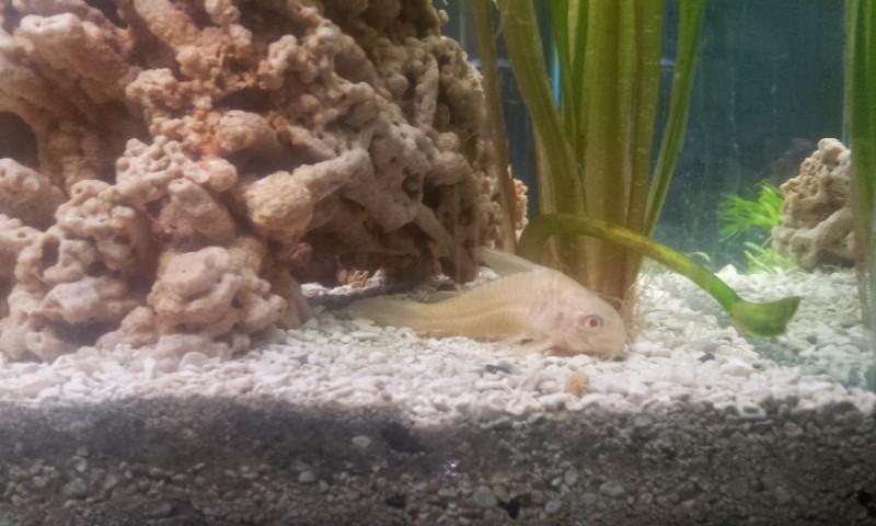 Bonjour mon aquarium 20140320