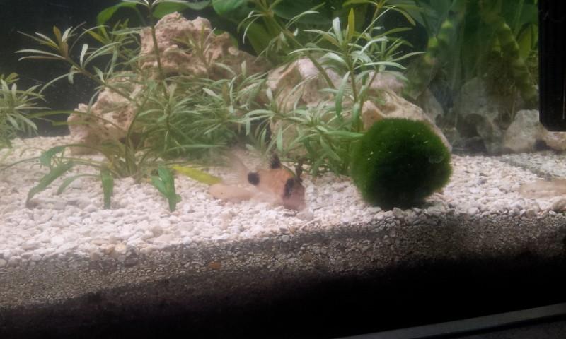 Bonjour mon aquarium 20140322