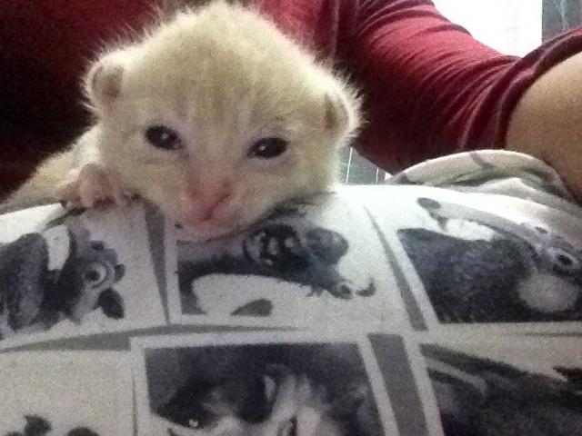 Portée 4 chatons Img_2731