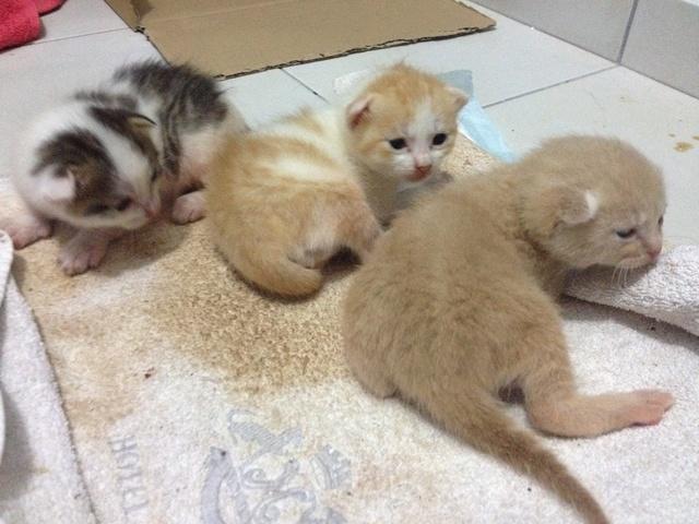 Portée 4 chatons Img_2734