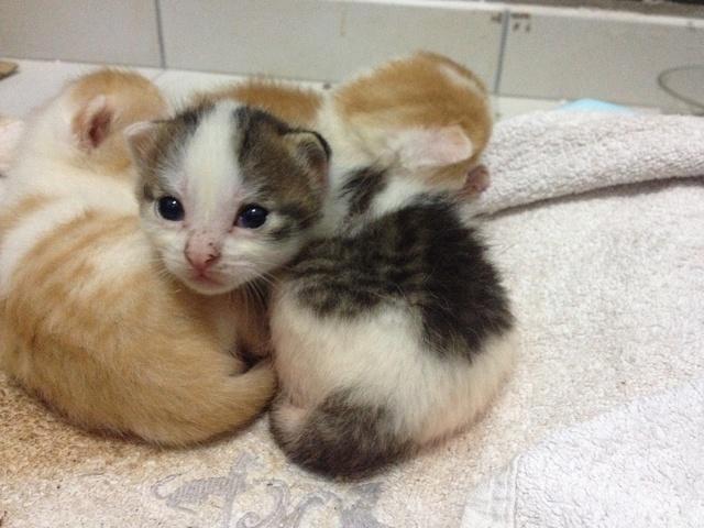 Portée 4 chatons Img_2736