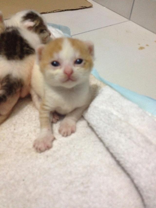 Portée 4 chatons Img_2738