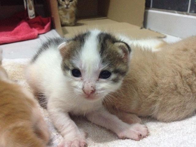 Portée 4 chatons Img_2811
