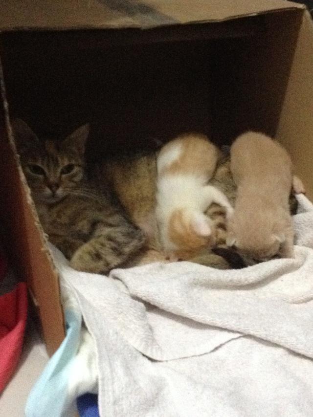 Portée 4 chatons Img_2812