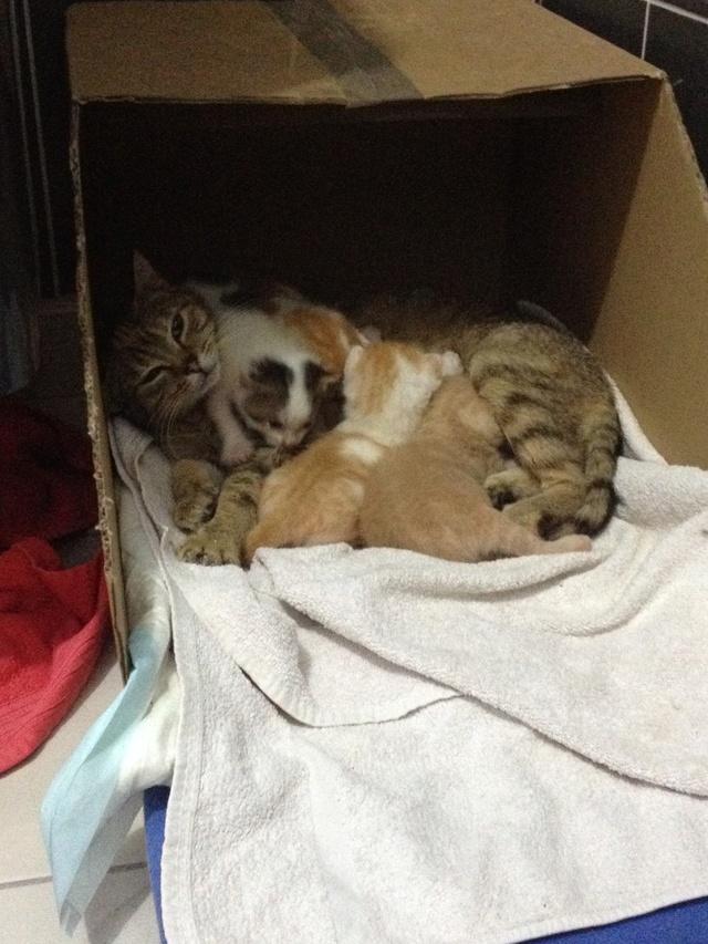 Portée 4 chatons Img_2813