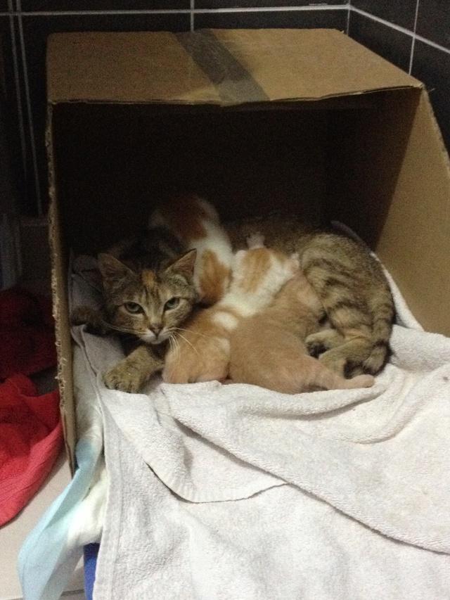Portée 4 chatons Img_2815