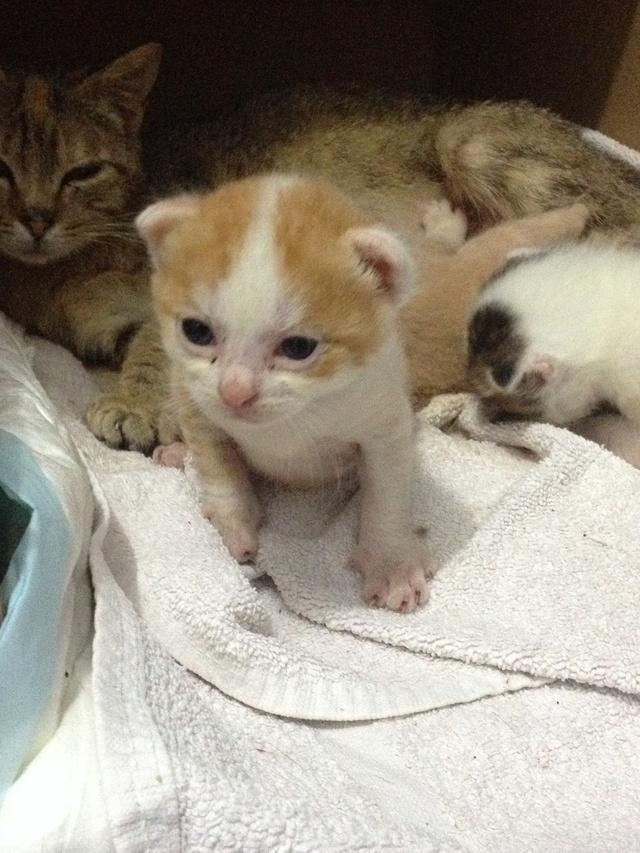 Portée 4 chatons Img_2817