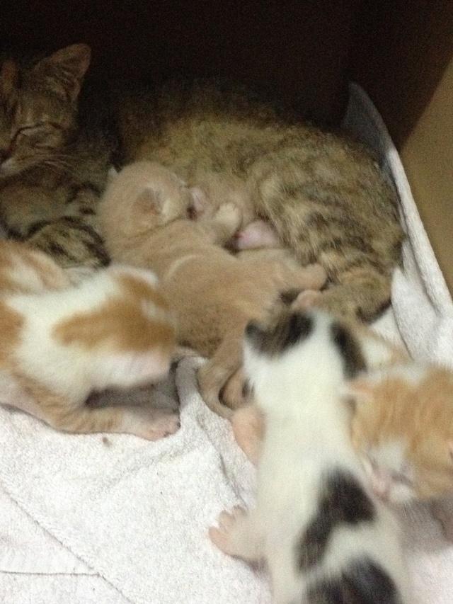 Portée 4 chatons Img_2818