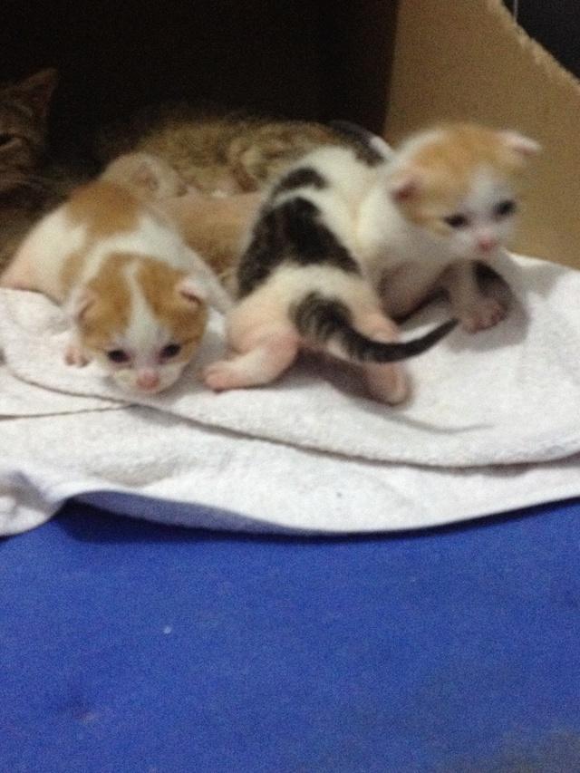 Portée 4 chatons Img_2819