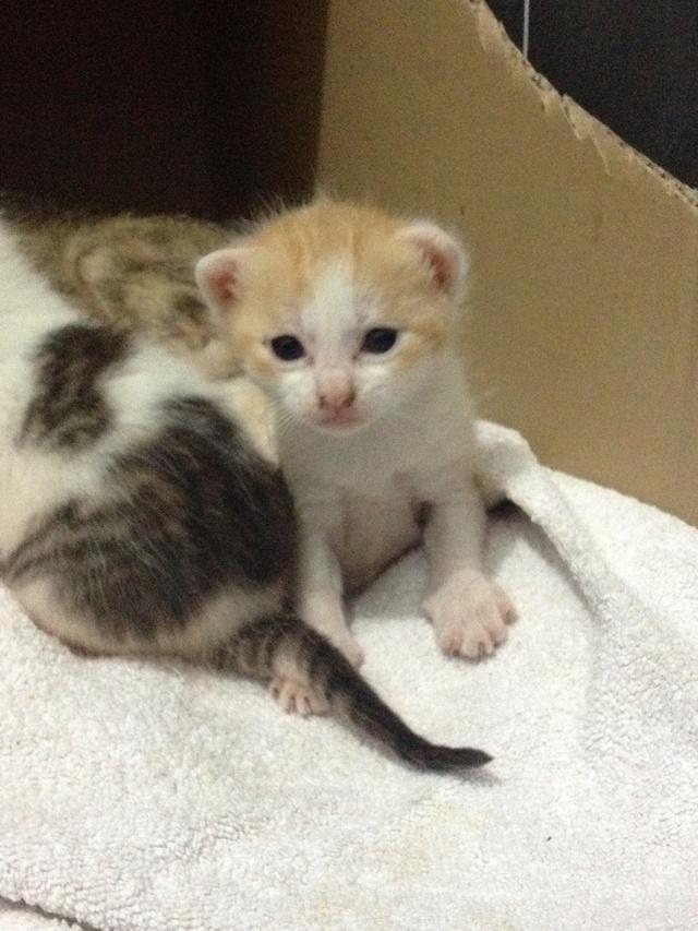 Portée 4 chatons Img_2820