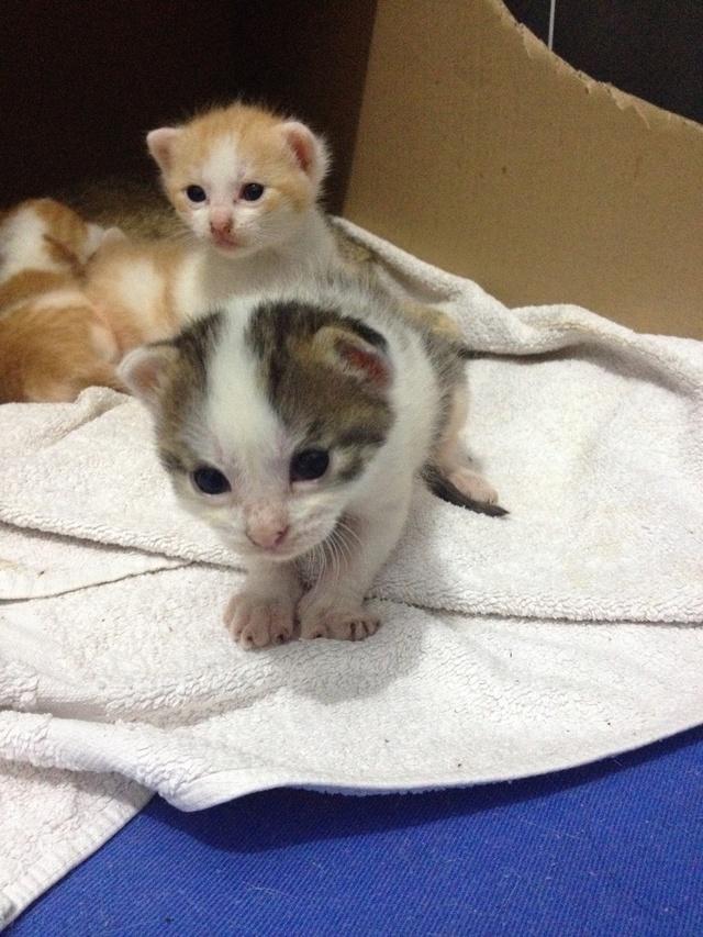 Portée 4 chatons Img_2821