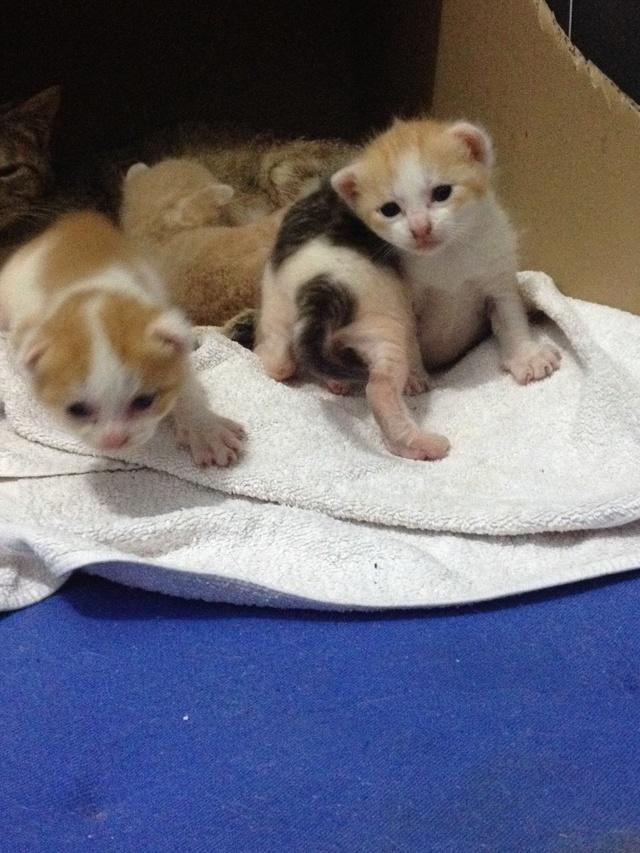 Portée 4 chatons Img_2822