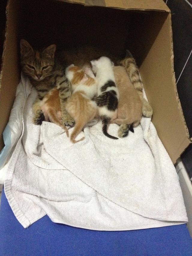 Portée 4 chatons Img_2823