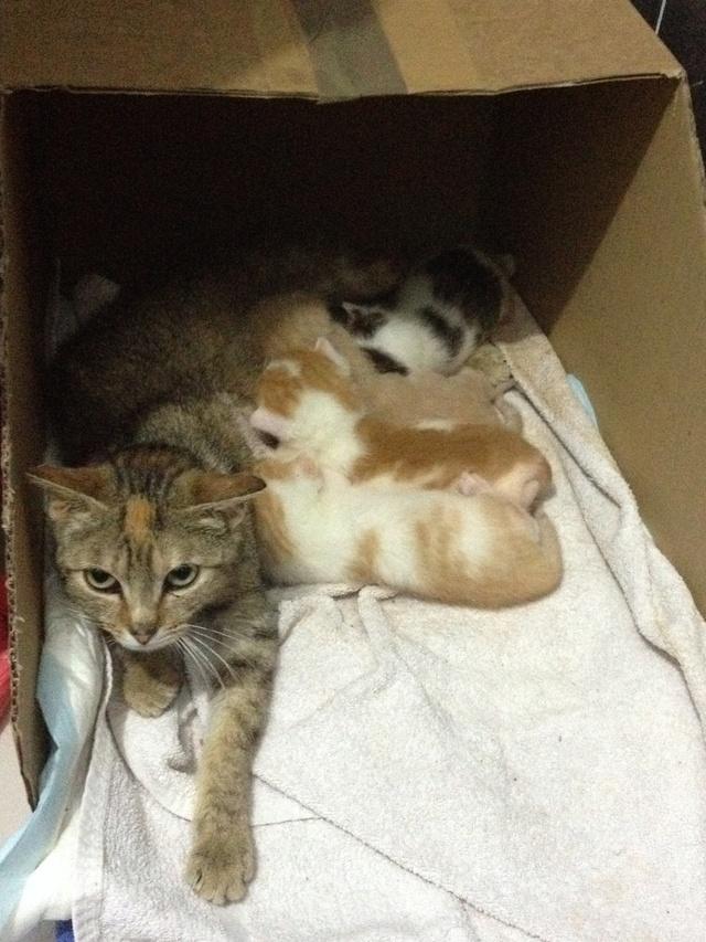Portée 4 chatons Img_2824