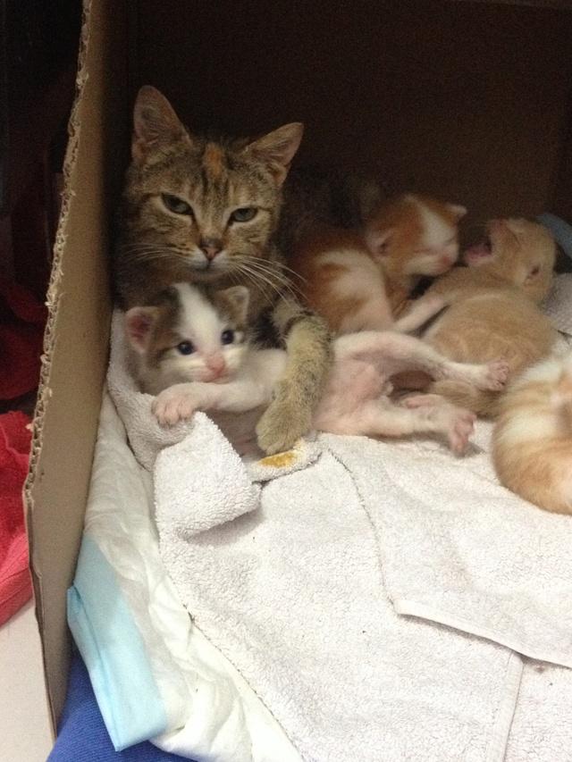 Portée 4 chatons Img_2825