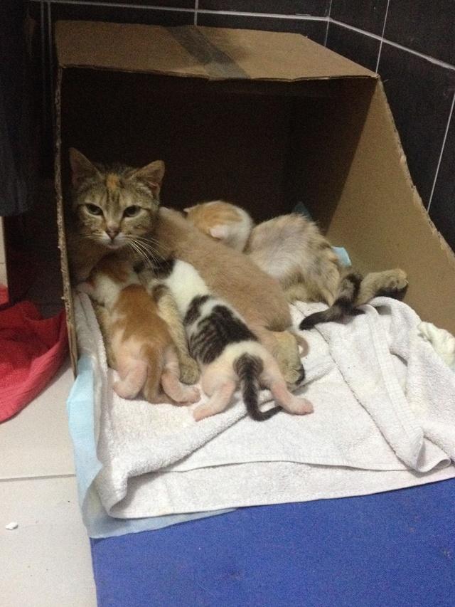 Portée 4 chatons Img_2826