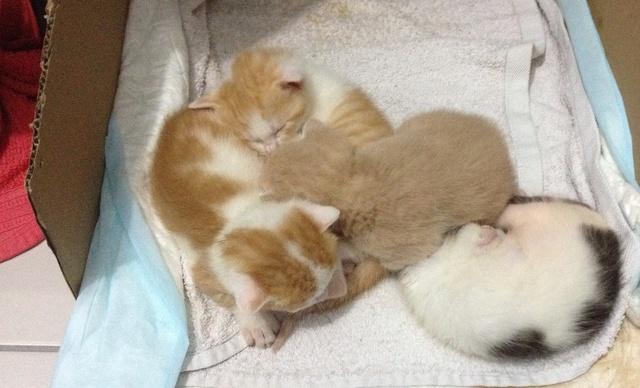Portée 4 chatons Img_2831