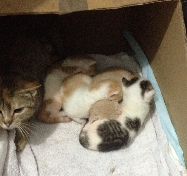 Portée 4 chatons Img_2832