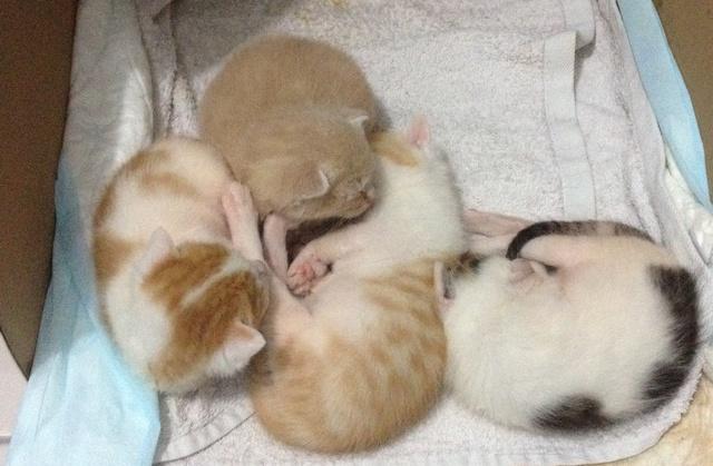 Portée 4 chatons Img_2833