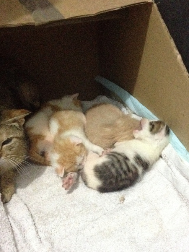 Portée 4 chatons Img_2834