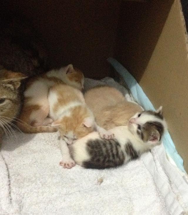 Portée 4 chatons Img_2835