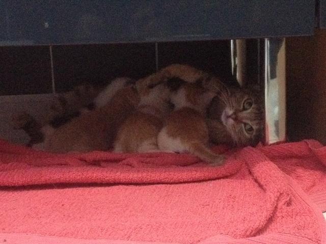 Portée 4 chatons Img_2836